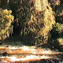 Le fleuve Congo, Zaïre River, épisode#2, La Route vers Kikondja. La Mission, le Chef, la piste (1985)