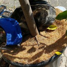 Squirel aussi, aime se prélasser au pied de mon citronnier...