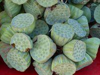 Les graines de lotus