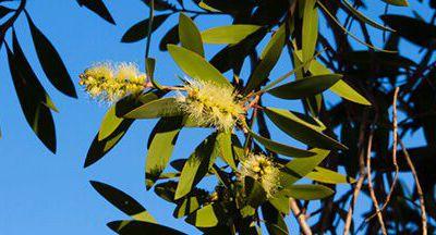 Rhume : quelques plantes aux résultats concluants