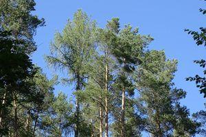 """Réchauffement climatique : l'Office National des Forêts veut """"accélérer"""" la lutte"""
