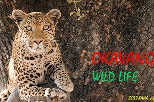 Escapade 2019, au Botswana : vie sauvage du fleuve Okavango