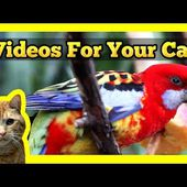 Videos for your Cat - Parrots, Finches, Rosella, Eclectus