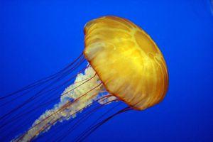 Sur le divan de l'estran, épisode 5 : la méduse
