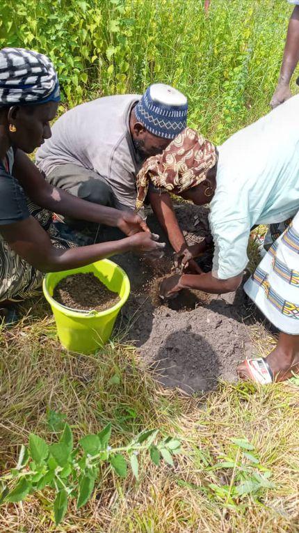 Mise en place de 9 citronniers à Sinthiou Bakhoum le lundi 11 octobre.