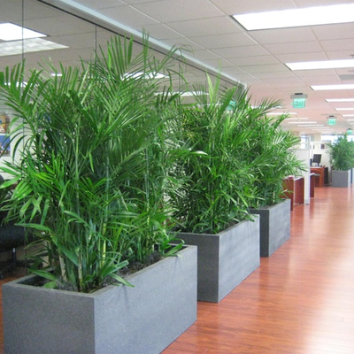 Looking for Special Indoor Plants Melbourne? This is Right Place!