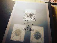 Tryptique d'insectes dont Graphosoma (gouache et encre sur papier aquarelle satiné 300gr) / Cabinet de Curiosités by Colpizen