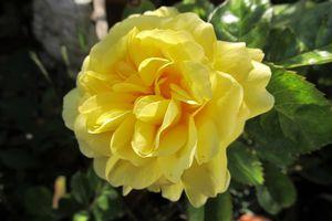 Yellow Meilove
