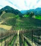 The Vines of San Francisco Bay