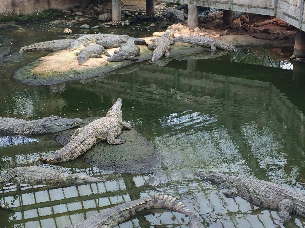 Visite de la ferme aux crocodiles à Pierrelatte (26)