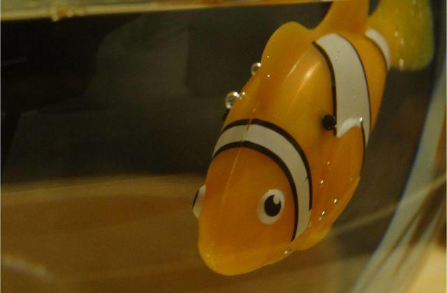 On a adopté un drôle de poisson clown ! (test Robo Fish)