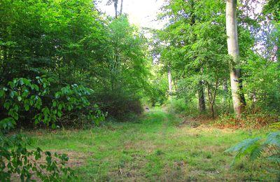 carrefour_Route du Parquet du Bois_Route Rivié