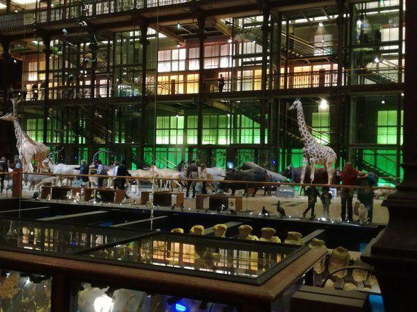 Grande galerie de l'évolution - Muséum National d'Histoire Naturelle