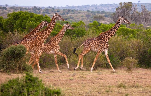 African Tours: Scenic, Wild and a whole lot more!