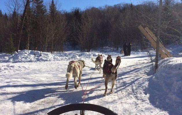 CANADA 2017 – Part 5 : Initiation aux chiens de traîneau