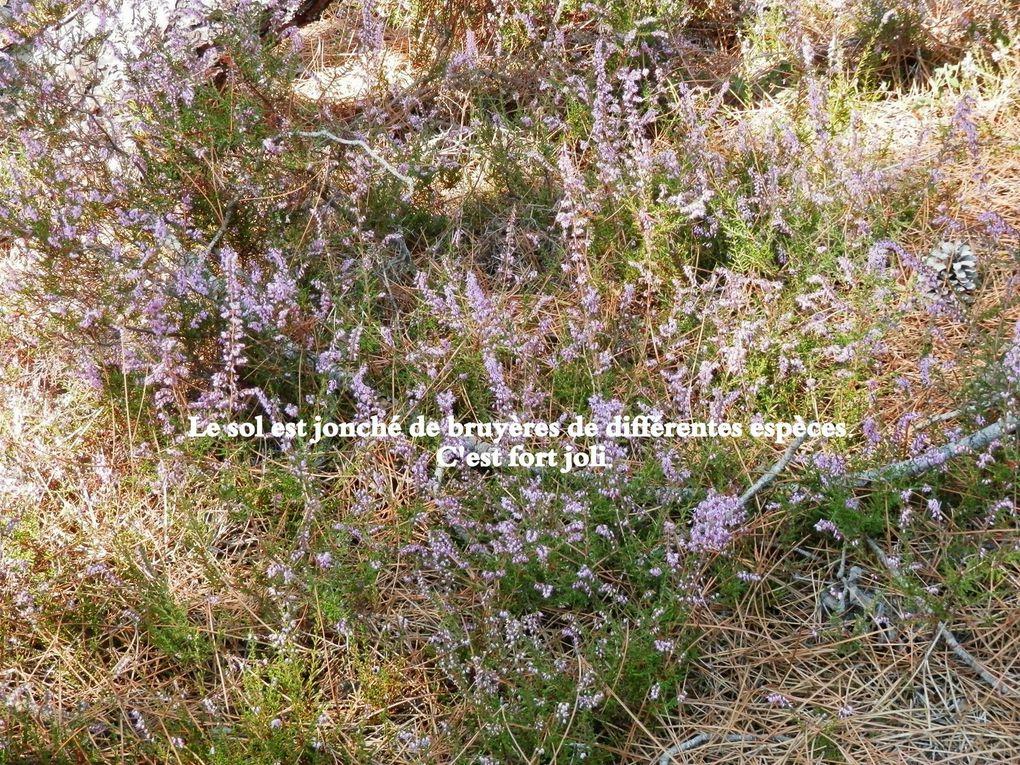 Album - mercredi-25-septembre---Piolenc