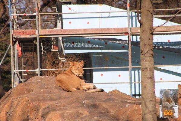 Kurzbesuch im Zoo Berlin 08.03.2021