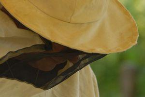 La Récolte du Miel, Premier volet