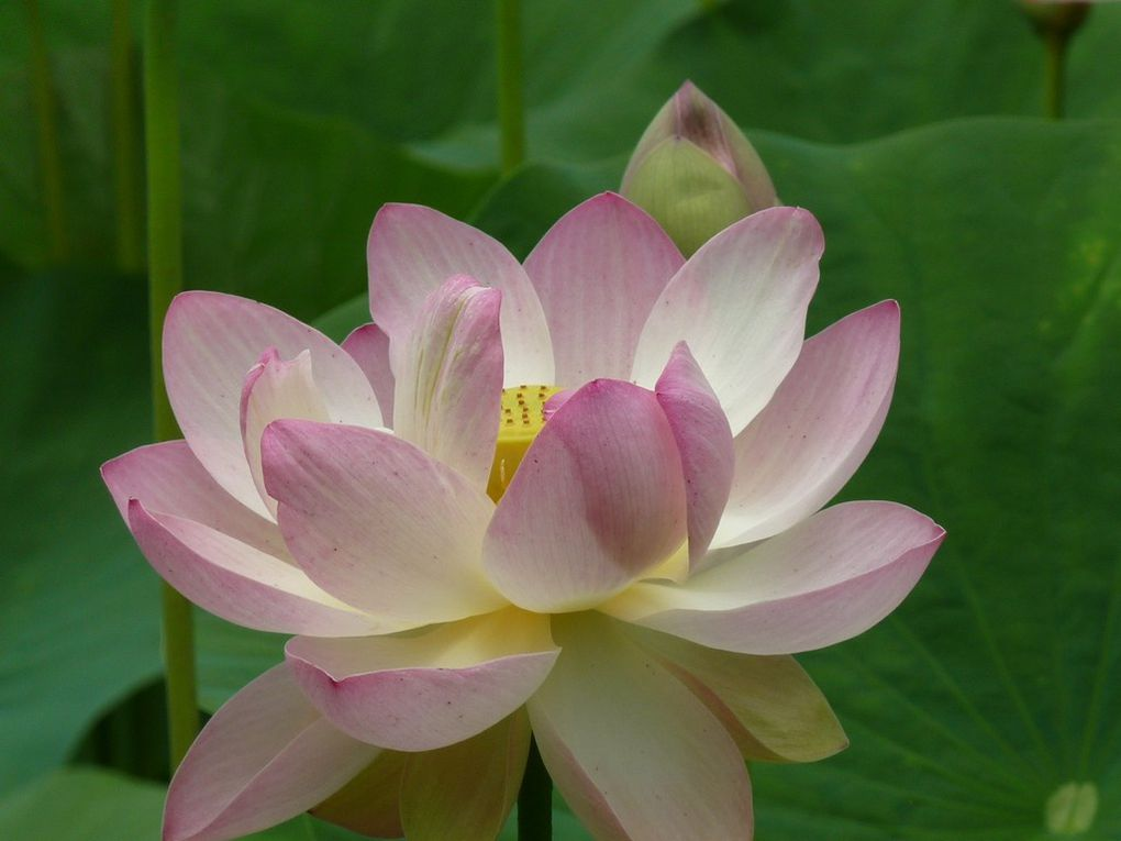 Fleurs 115