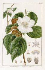 """Colloque """"Conservation et restauration des jardins historiques"""" (6-7 octobre 2011)"""