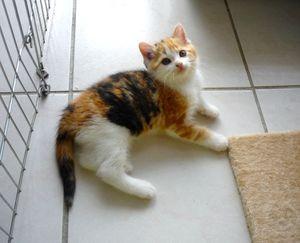 Liloo, chaton femelle isabelle 2 mois, à l'adoption -> adoptée