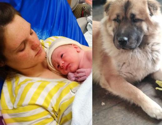 Un chien a mutilé un nouveau-né à mort `` pendant que maman était dans la toilette et que papa était dans le jardin ''
