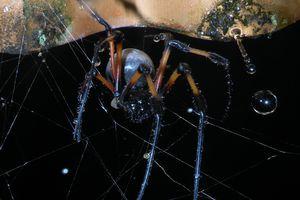 L'araignée et la goutte d'eau