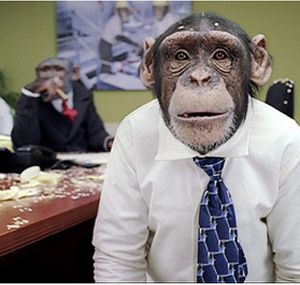 Los 5 rasgos que separan al chimpancé del Social...