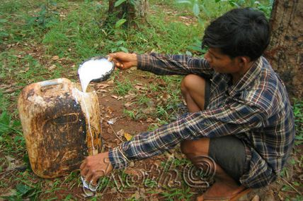 Le caoutchouc et le Cambodge.
