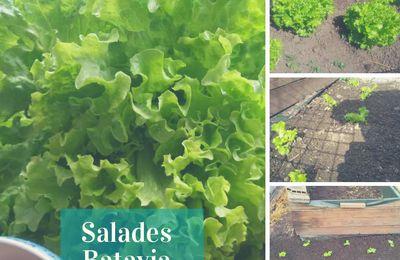Légumes cultivés