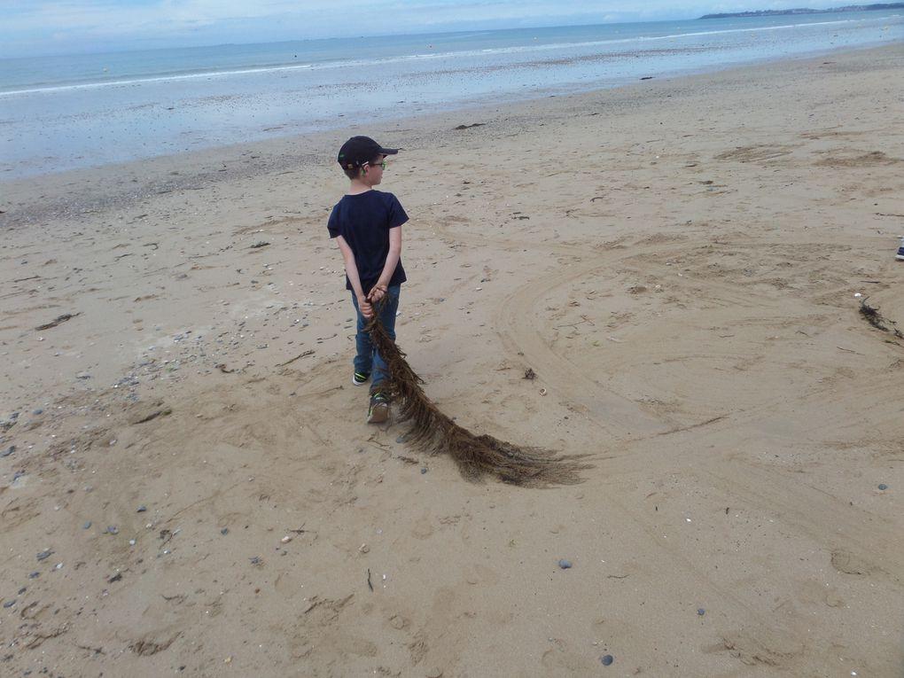 Sortie à la plage  pour les élèves de Vergoncey