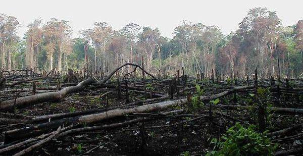 Amazzonia sta scomparendo. Deforestazione +290% in Brasile!