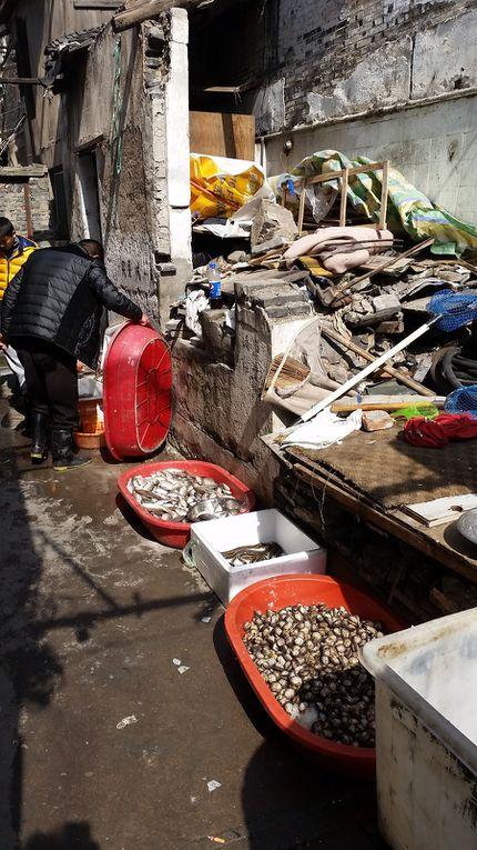 Coquillages et Crustacées Old street ... Pas d'écoeurement car si c'est vivant c'est sain... Bon OK on ne parle pas de la polution de l'eau de laquelle ces bêtes sortent...