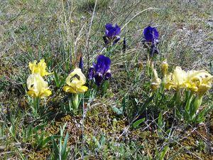 C'est le retour du printemps (4) pour #photodimanche