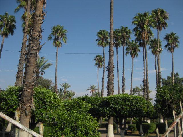 Journée de promenade dans Marrakech, les jardins du Koutoubia, les souks.etc...