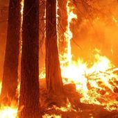 Pétition : Les forêts françaises brûlent ! Ne les laissons pas dépérir dans des incendies !