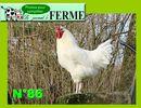 La poule Charollaise