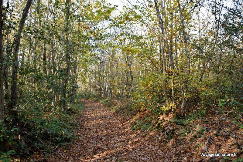 Balades dans les bois de Montfalcon