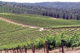Viticulture  dans la  Sierra Foothills