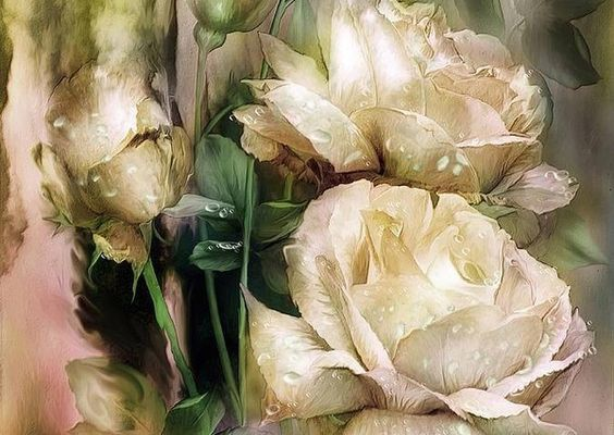 Rose blanche...