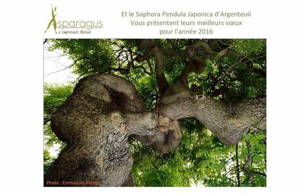 Asparagus - l'empreinte nature vous présente ses meilleurs voeux pour 2016
