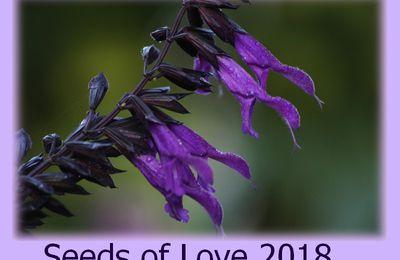 Seeds of Love 2018