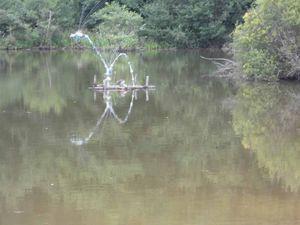 En promenade autour de l'étang Lallemand