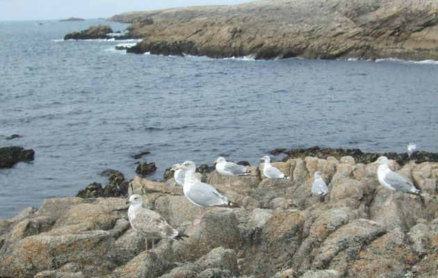La côte si sauvage de Quiberon