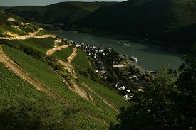La Rheingau, La vigne et la joie de vivre