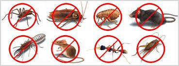 Get the Best pest removal service for Ehrlich Pest Control