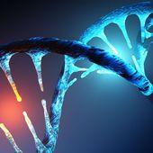 ADN : une nouvelle forme découverte dans des cellules humaines