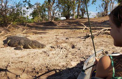 En bateau sur la Chobe River, 2ème tentative