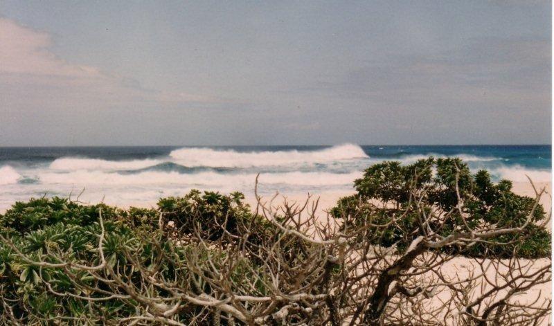 Petits paradis terrestres réservés aux tortues et aux oiseaux marins