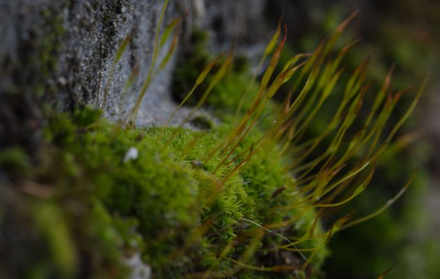 Petite plante verte, rase et douce...